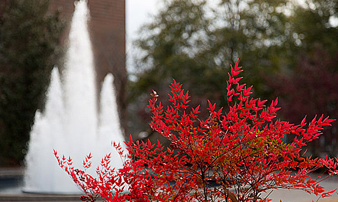 fountain and fall foliage