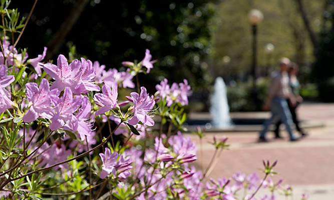 flowers and fountain on north campus